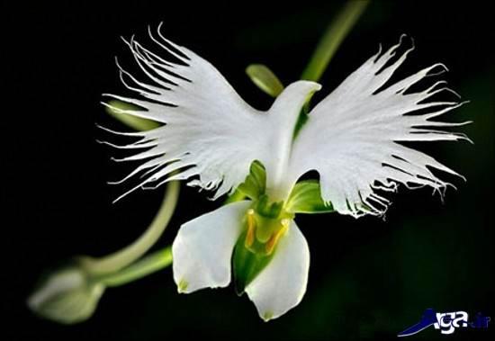 تصاویری از گلهای خارق العاده