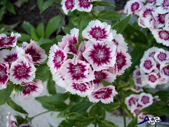 جذابترین گلهای دنیا