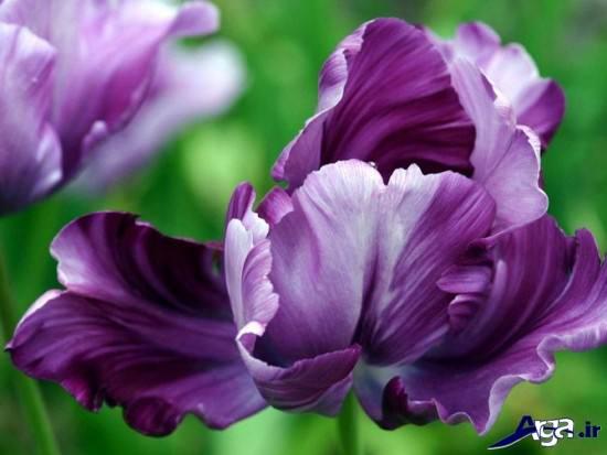 عکس های زیبایی از گلهای مختلف در دنیا