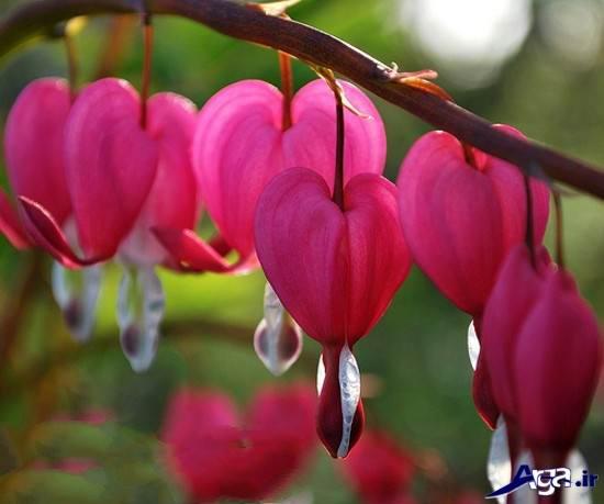 عکس های گلهای خاص و زیبا