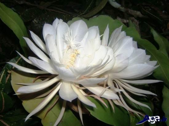 زیباترین نوع گل ها