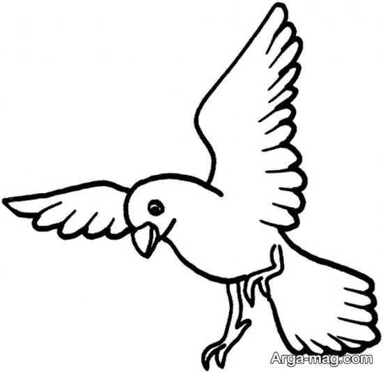 رنگ آمیزی پرنده زیبا