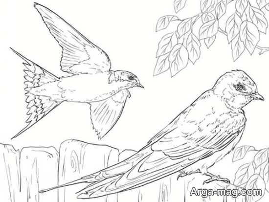 نقاشی پرنده شکاری زیبا