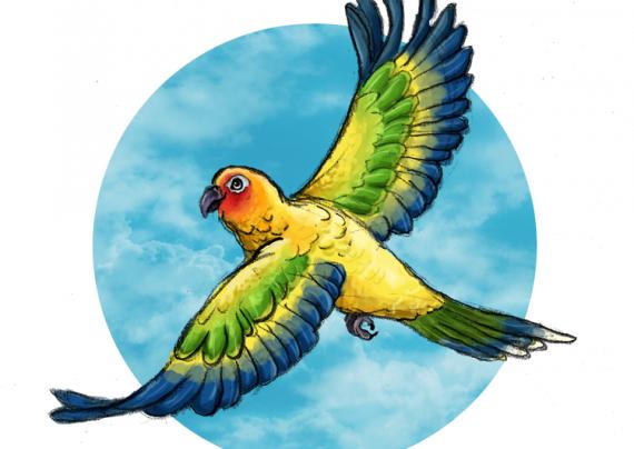 نقاشی پرنده های مختلف و زیبا برای رنگ آمیزی کودکان