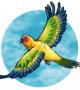 با این ایده ها به کودکتان نقاشی پرنده های متفاوت را آموزش دهید