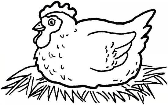 نقاشی مرغ