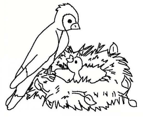 نقاشی های پرنده های زیبا و دوست داشتنی