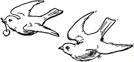 رنگ آمیزی نقاشی پرنده های زیبا