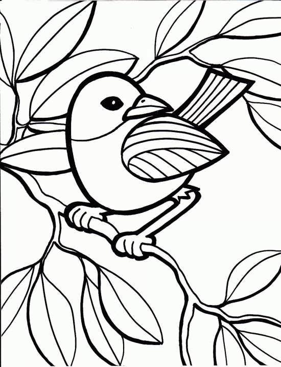 انواع نقاشی های زیبا و متنوع از طوطی