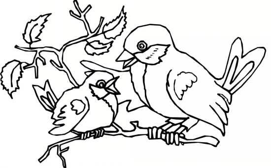 نقاشی های زیبا پرنده های مختلف