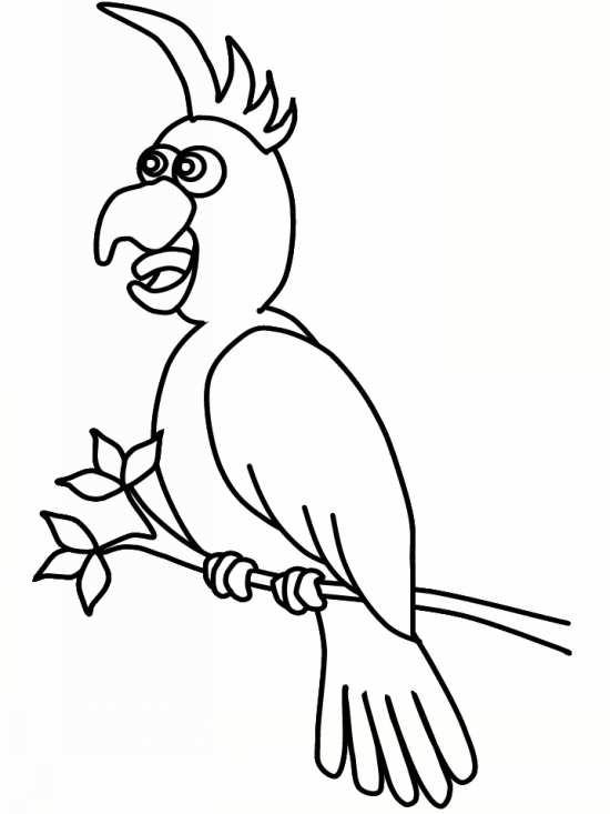 نقاشی های متنوع پرنده ها برای کودکان