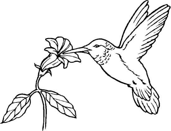 نقاشی گل و پرنده