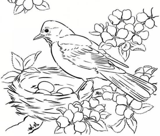 نقاشی های متنوع پرنده
