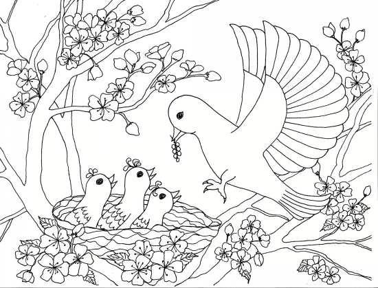 نقاشی غذا دادن پرنده به بچه هایش