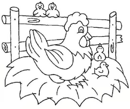 نقاشی مرغ و جوجه های زیبا