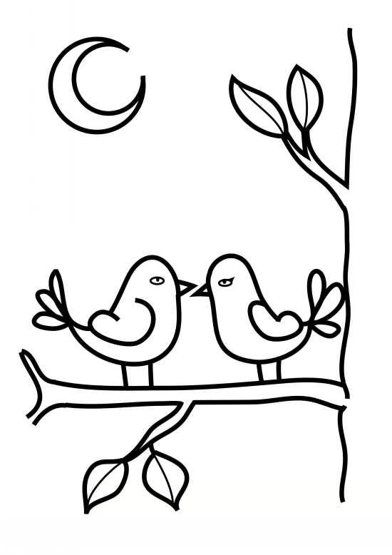 نقاشی های پرنده های کوچک