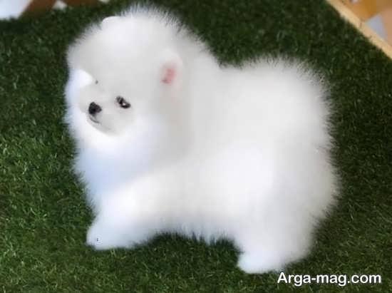 عکس سگهای پشمالو