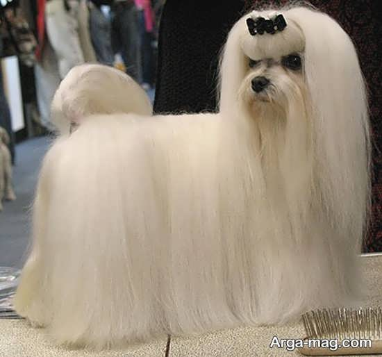 انواع عکس سگ های پشمالو