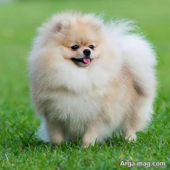 انواع عکس سگهای پشمالو