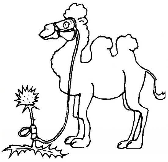 نقاشی شتر در صحرا