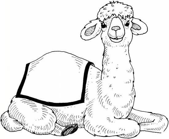نقاشی های جالب درباره زندگی شتر