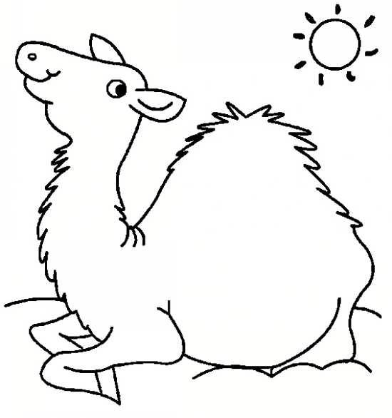 نقاشی خورشید و شتر