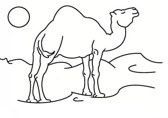 نقاشی زیبا و جدید شتر