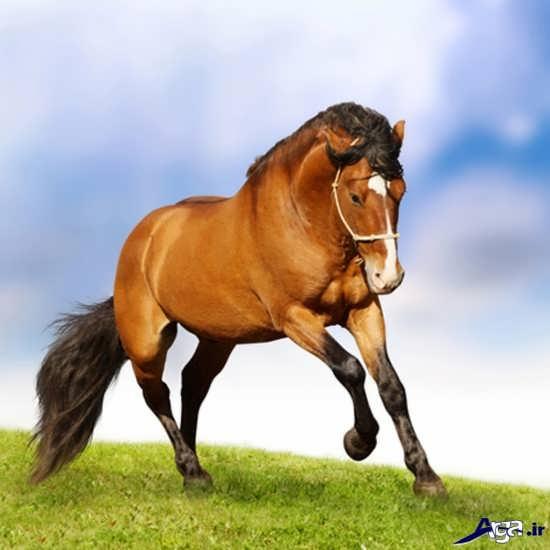 تصاویر انواع اسب زیبا و جذاب