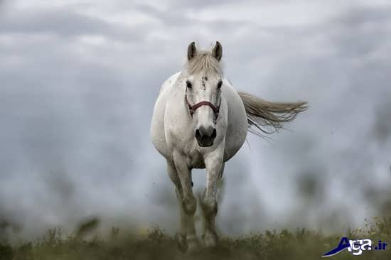 انواع عکس اسب سفید و زیبا