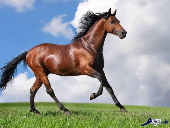 زیباترین تصاویر انواع اسب در طبیعت