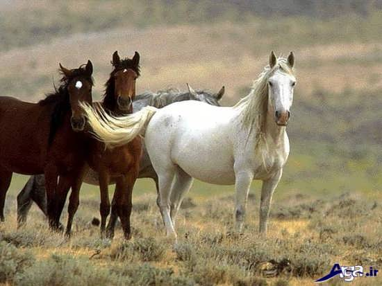 انواع تصاویر اسب های زیبا