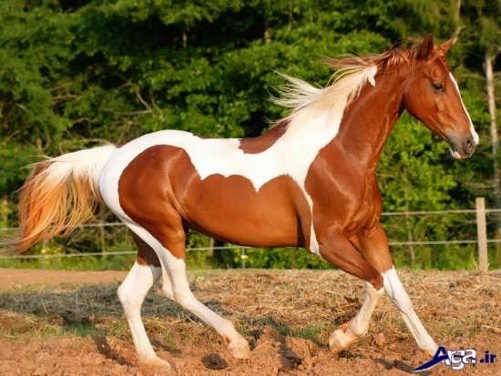 زیباترین و جذاب ترین عکس های اسب