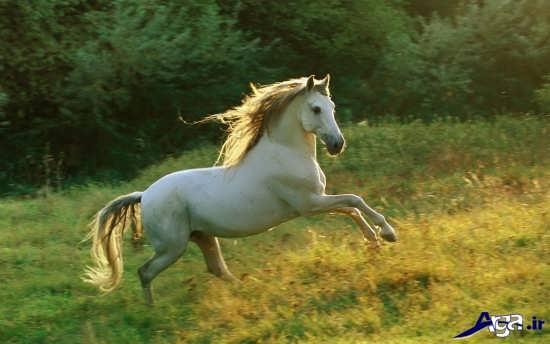 زیباترین و جذاب ترین انواع اسب ها در طبیعت