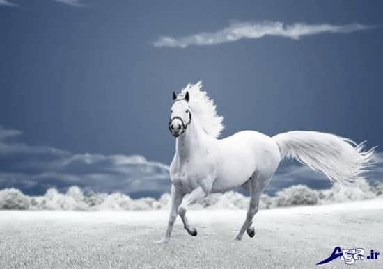 انواع عکس های جالب و جذاب اسب