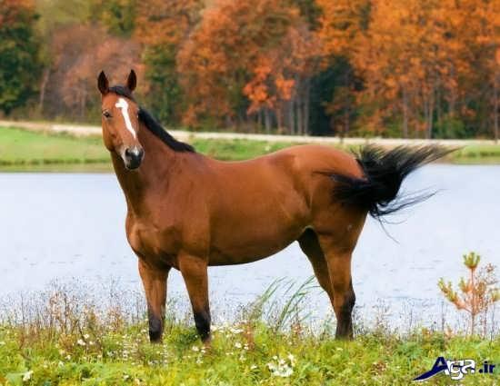 عکس اسب های زیبا و دوست داشتنی