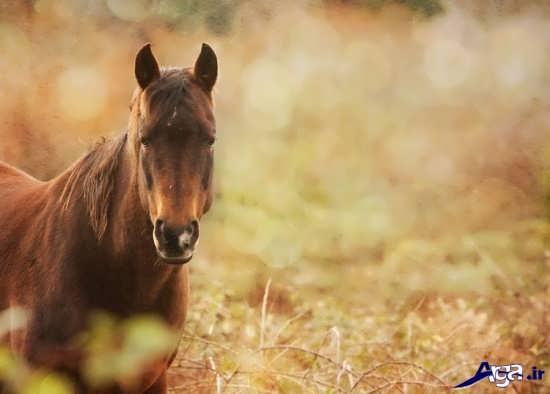 عکس اسب های زیبا و باوقار در طبیعت