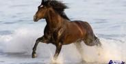 عکس اسب های زیبا با نژادهای مختلف