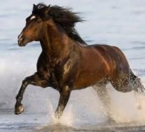 تصاویر اسب های زیبا و باوقار در دل طبیعت