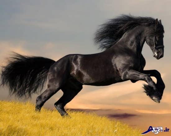 انواع عکس اسب های زیبا و جذاب