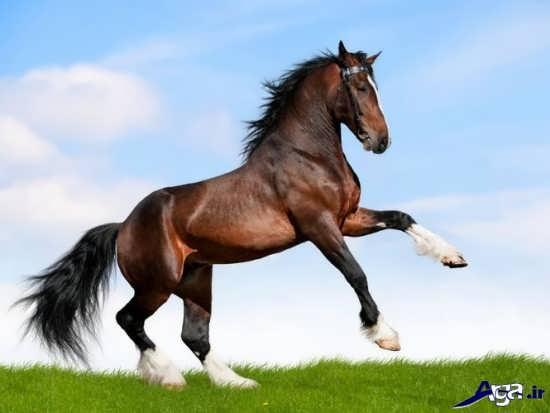 عکس اسب های تندرو و زیبا
