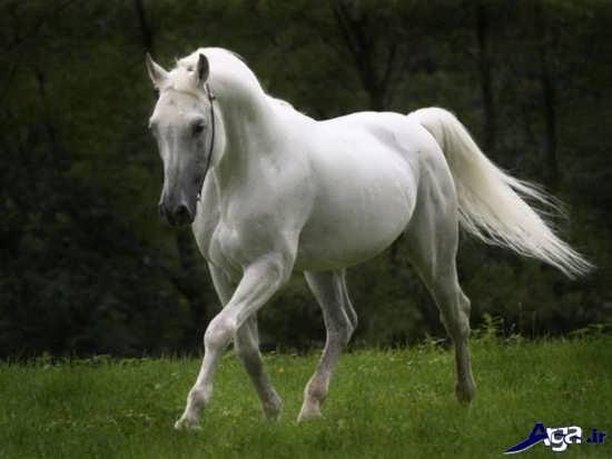 زیباترین و جذاب ترین اسب ها