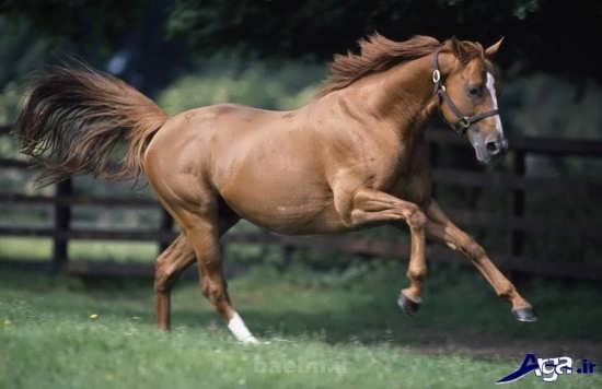 انواع عکس های بسیار زیبای اسب