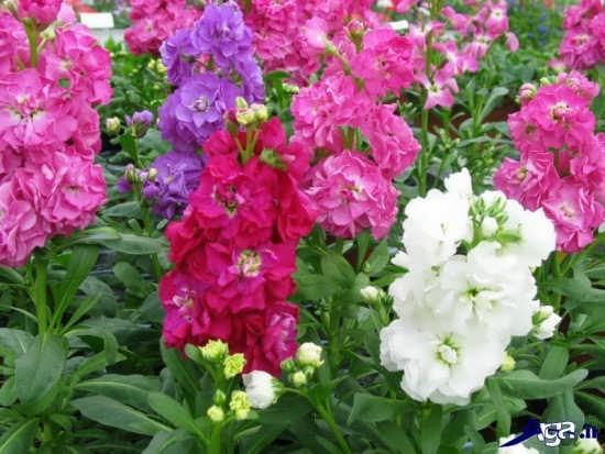انواع گل های زیبا و جالب طبیعت