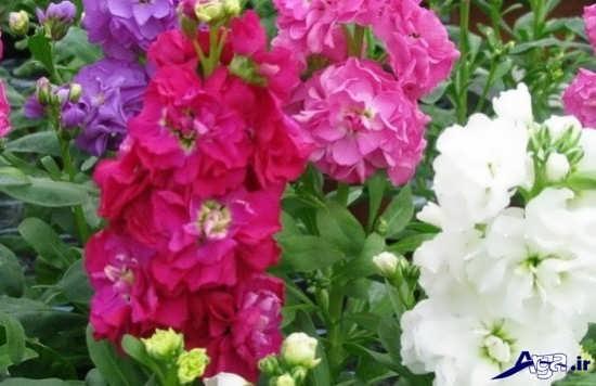 زیباترین گل های خوشبوی طبیعت