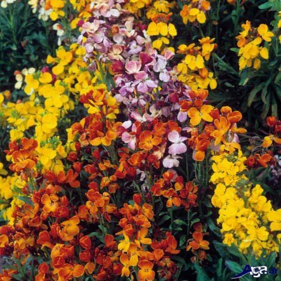 تصاویر زیباترین گل های طبیعت