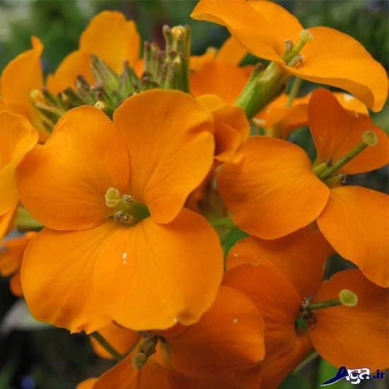 گالری انواع گل های زیبای طبیعت