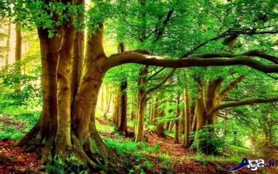عکس مناظر زیبای طبیعت