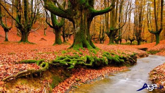 منظره زیبای پاییزی