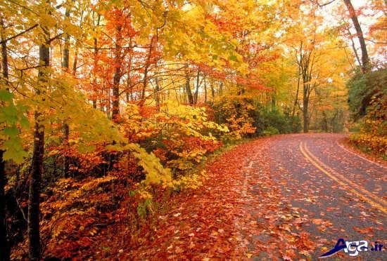 مناظر زیبا و دیدنی پاییز