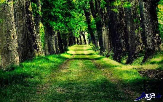 تصویر زیبای جنگل